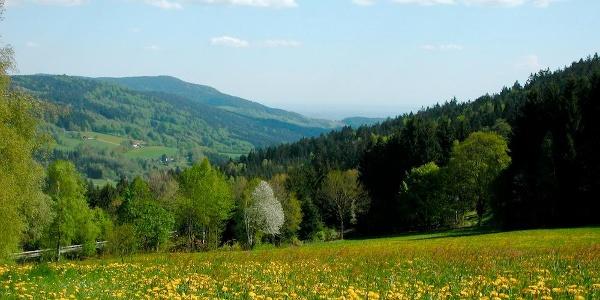 Aussicht vom Wanderweg nach Maibrunn
