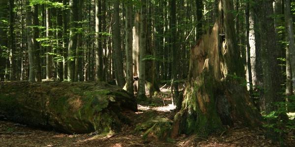 Urwald-Erlebnisweg Watzlik-Hain