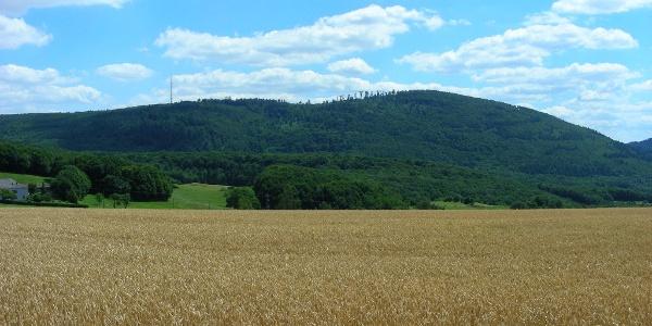 Über weite Felder schweift der Blick zum Donnersberg.