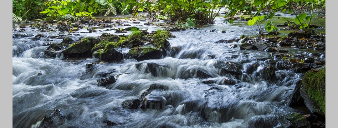 Bachlauf im Naturpark