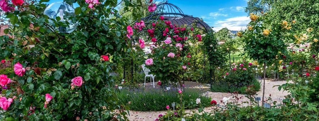 Rosen-Duft-Garten Nöggenschwiel
