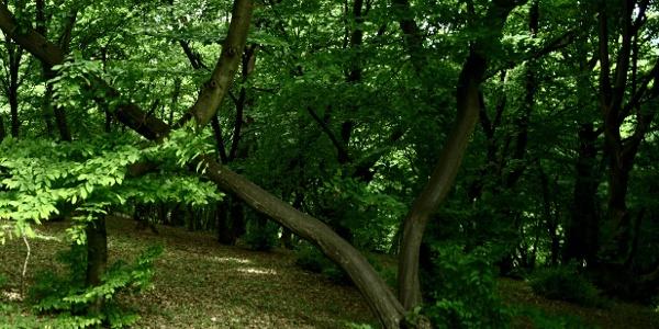 Der Hoia Baciu Wald