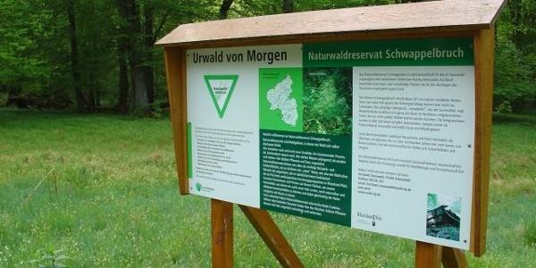 Naturwaldreservat Schwappelbruch