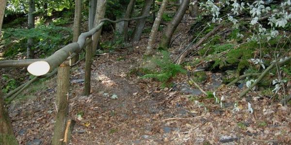 Waldweg mit Schieferbruchsteinen