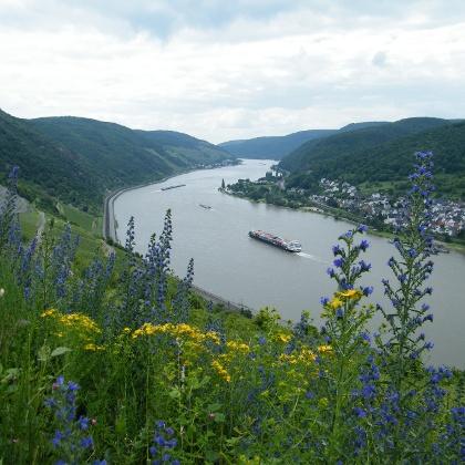 Von der Unterstandshütte schweift der Blick über den Rhein stromaufwärts.
