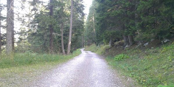 Strada forestale Malga Zambana/Dosso Larici.
