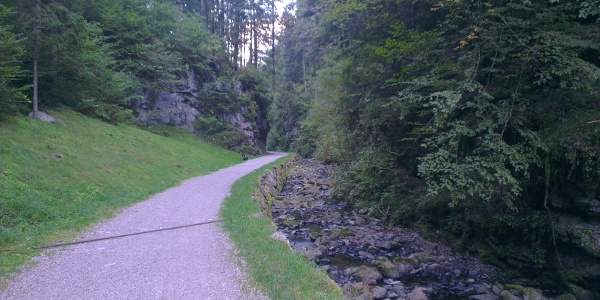 Stradina forestale Andalo-Molveno.