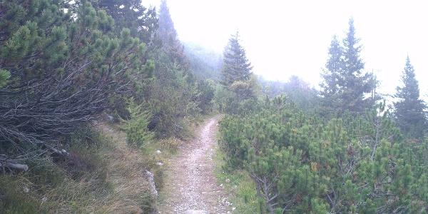Seconda parte di sentiero più semplice.