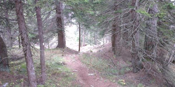 Letzter Teil der Tour... durch den Wald