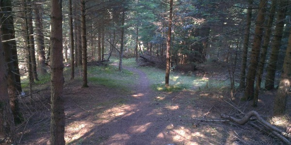 Trail nel bosco.