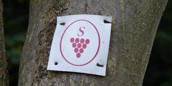 Markierung Sächsischer Weinwanderweg
