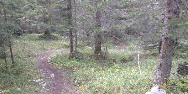 Inizio del trail nel bosco.