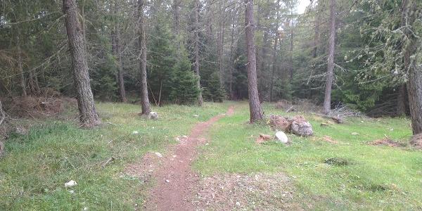 Prima parte del trail