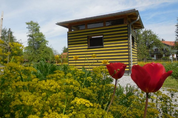 Schaubienenhaus im Frühling