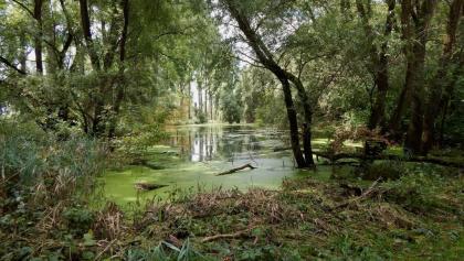 Überfluteter Auwald