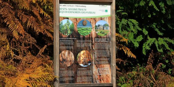 Infotafel Sequoia
