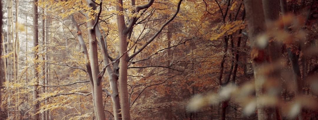 Laubwald im Spessart