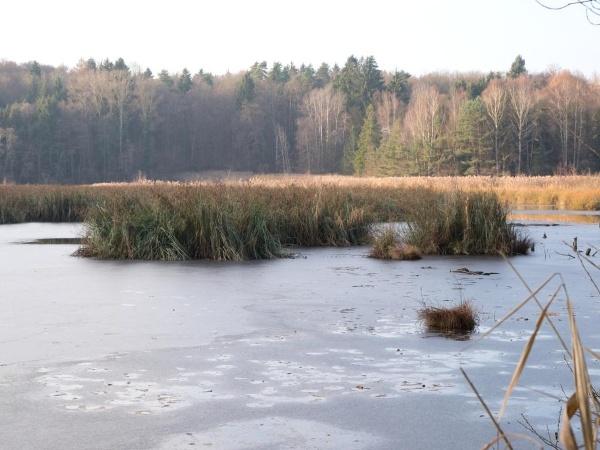 Naturschutzgebiet Bündtlisried