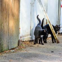 Katzen beim Irrenberg