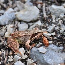 Frosch am Weg -  Wanderer trifft man aber kaum