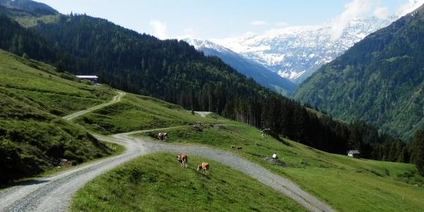 Die wunderschöne Almenlandschaft am Felberberg.