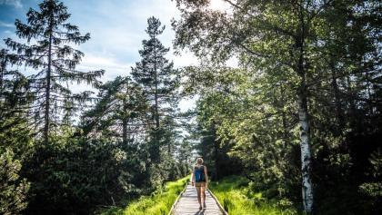 Wanderer im Wildseemoor am Kaltenbronn