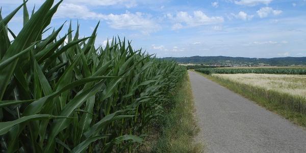 Hier wird nicht nur Getreide angebaut