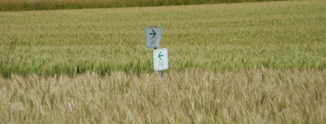 In den Getreidefeldern