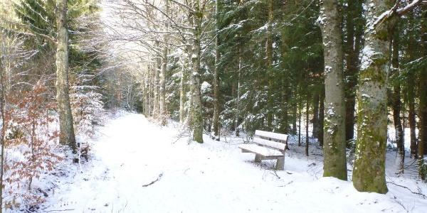 Verschneiter Waldweg beim Roßbergstadion