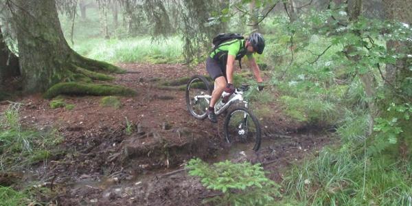 matschiger Trail im Wald
