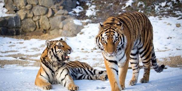 Tier-Erlebnispark Bell 4
