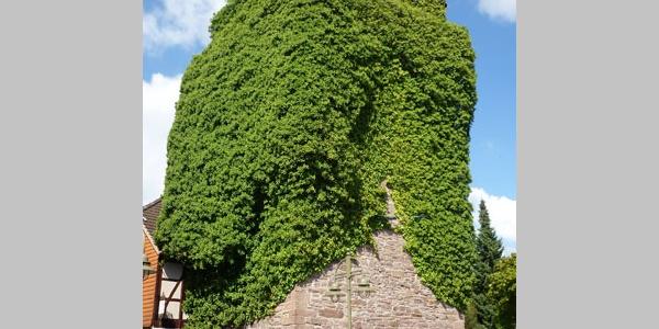 Festungsturm am Mühlentor