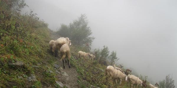 Weggefährten im Bereich des Obertilliacher Tales