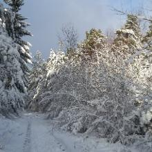 Winterwonderland - kurz nach Start oberhalb von Kall