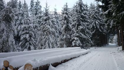Waldweg in Richtung Hünersedel
