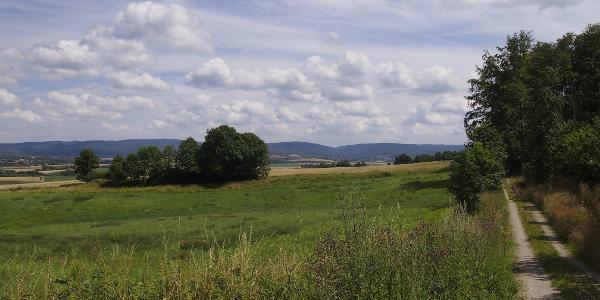 Waldrand Mechtshausen