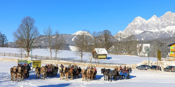 horse-drawn-sleighs at the trail head for snowshoeing & horse-drawn-sleigh rides in Rohrmoos