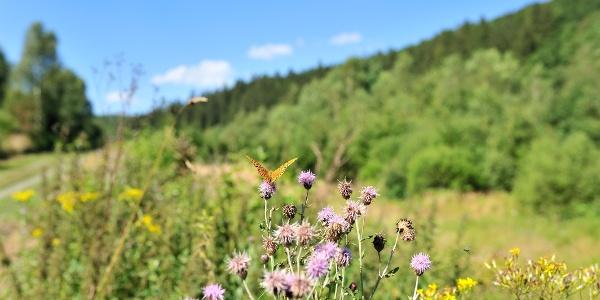 Wandern im Tal der Schmetterlinge