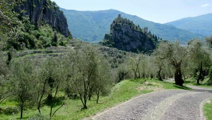 The Castle of Arco and the olive groves