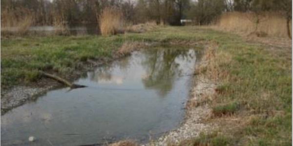 Flachwasserteich für die Sumpf-Heidelibelle