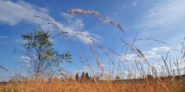 Waar de wind blaast Sourbrodt