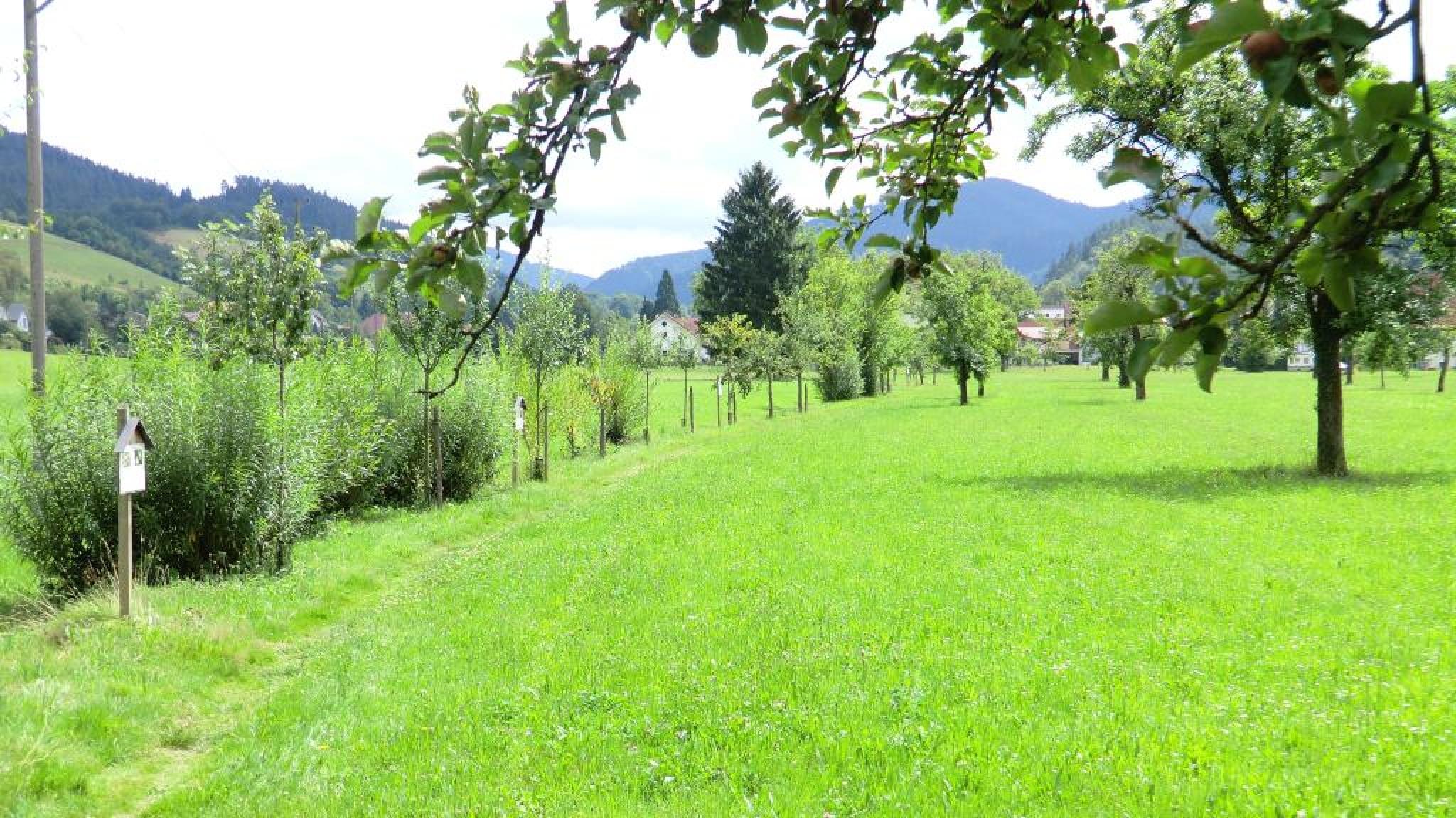 Obstbaumpfad im Ramsbach