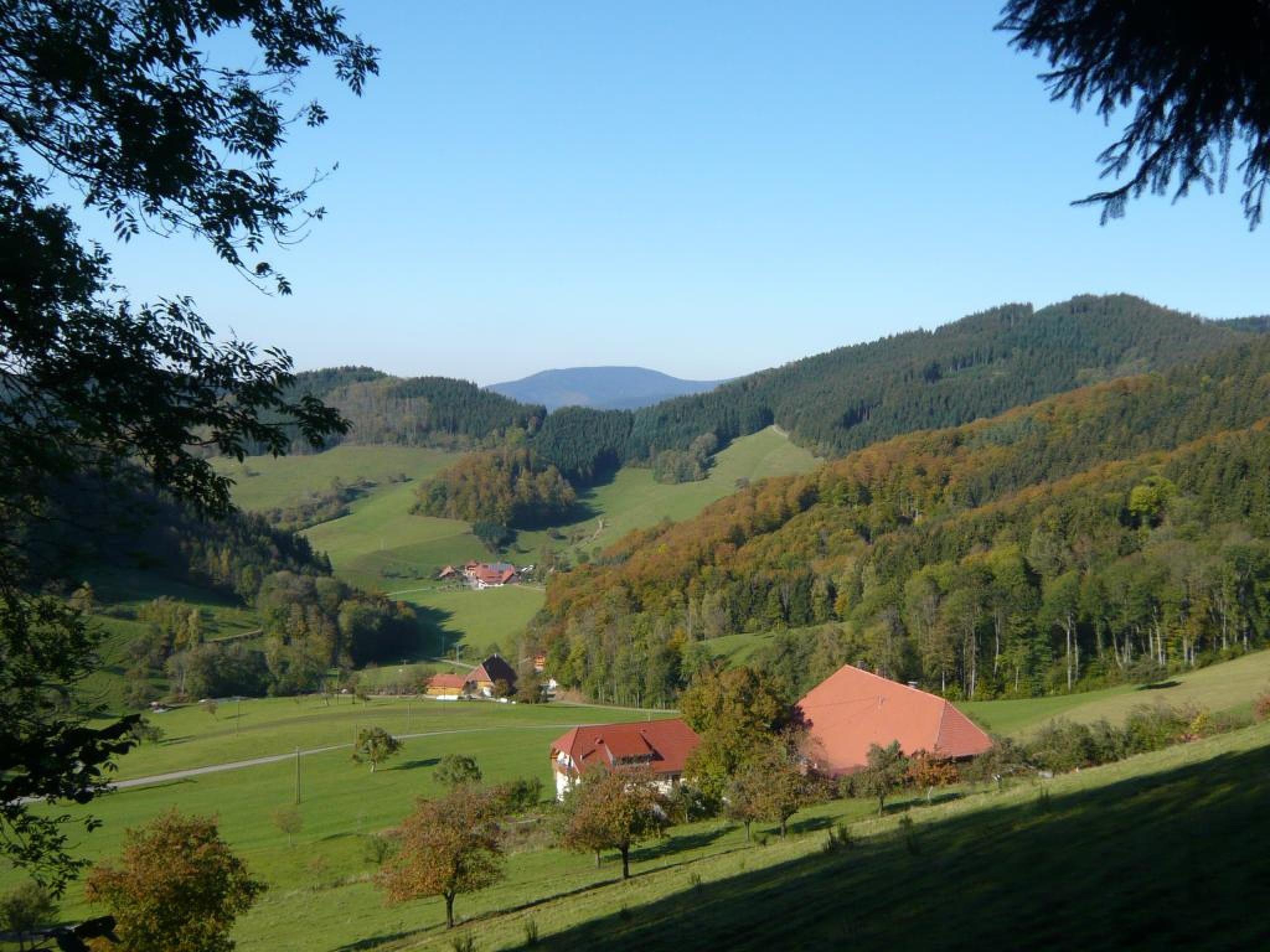 Buechertal in Muehlenbach