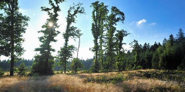 Het oneindige bos Rodt