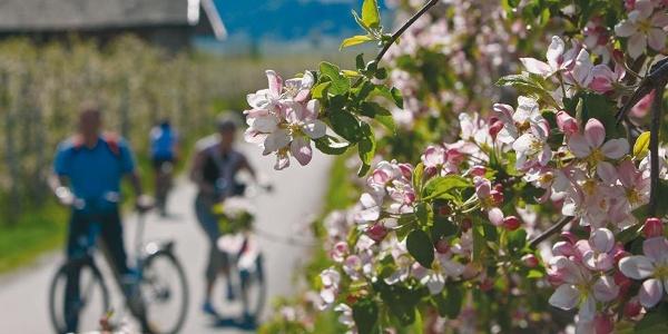 Bici Bolzano