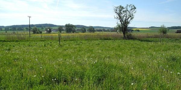 Landschaft im Labertal