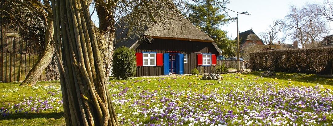 Blütenmeer an der Ostsee. Mecklenburg-Vorpommern ist ein Land wie aus dem Bilderbuch.