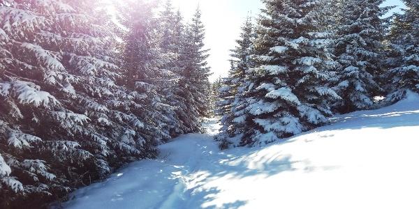 Verschneiter Wanderweg (Nr. 549)