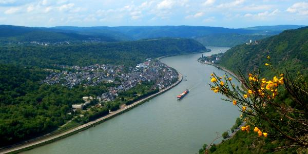 Traumhafte Aussichten ins Rheintal