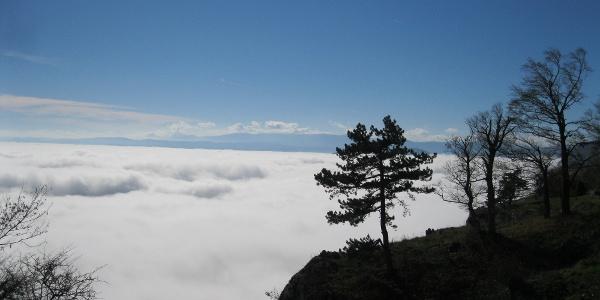 Nebelmeer (an den Felsabbrüchen der Hohen Wand)